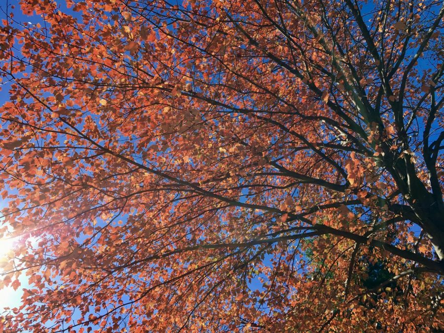 Leaves+changing+at+the+start+of+the+fall+season.+Staff+Photo%3A+Vionna+Eshghi.+