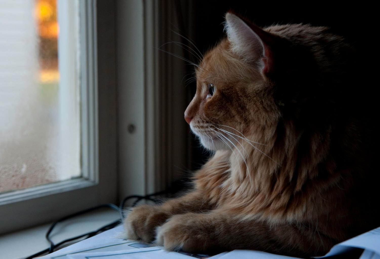 Doing absolutely nothing, such as staring out a window, allows your brain to strengthen neural pathways while increasing learning abilities. Creative Commons Photo: Wikimedia Commons.
