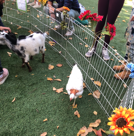 On Monday, Nov. 22, 2019, Menlo Students were given the opportunity to participate in the petting zoo provided by Jasper Ridge Farm. The opportunity was spearheaded by the Mental Health @ Menlo Club in an attempt to improve students mental health during Finals week.  Staff Photo: Ari Krane